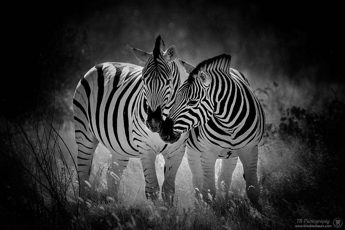 Südafrika / South Africa