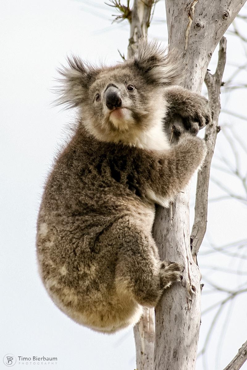Australien / Australia